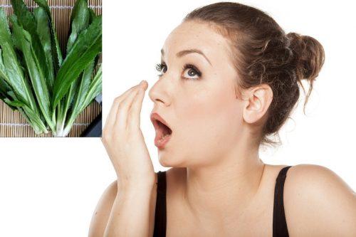 Rau mùi tàu – phương thuốc dân gian giúp chữa hôi miệng hiệu quả